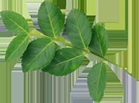 나뭇잎그림